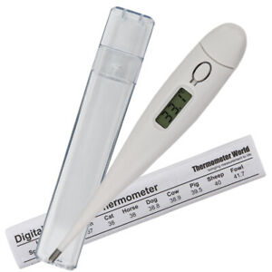 PET THERMOMETER DOG CAT HORSE PETS ANIMALS VET VETERINARY INC TEMP GUIDE- IN-234