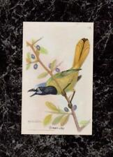 1922 Arm & Hammer Soda Green Jay Useful Birds 7th Series 13 by M E Eaton