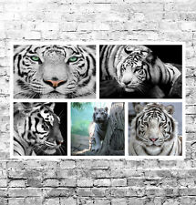 "STUNNING BENGAL TIGERS CANVAS COLLAGE #1 QUALITY WILDLIFE BOX CANVAS 30""X20"""