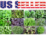 100+ ORGANICALLY GROWN Basil Mix Seeds 12 Varieties Heirloom NON-GMO Tulsi Thai