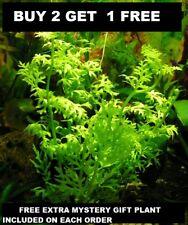 Water Sprite Ceratopteris Siliquosa Live Aquarium Plants Buy2Get1Free