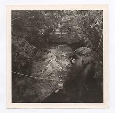 PHOTO ANCIENNE Crocodile Crocodiles Animal Abstrait Abstraction Vers 1960 ZOO