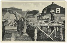 1940s-50s New Brunswick Canada Fish Drying Postcard -Fishermen