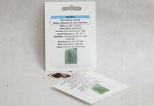 Riesen-Chinaschilf Miscanthus sinensis Samen Saatgut Ziergras Süßgräser Schilf