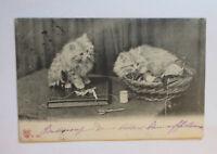 """""""Katzen, Korb"""" 1903 ♥ (33975)"""