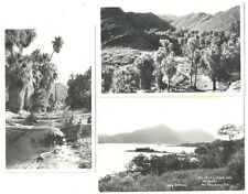 3 RPPC  California Views  c1930s ~ 2 Views of Palm Canyon & 1 of Mt Knocti