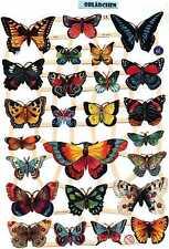 # GLANZBILDER # EF 7324  , wunderschöne Schmetterlinge