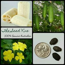 10+ SPONGE GOURD SEEDS (Luffa cylindrica) Edible Fruit Loofah Natural Shower