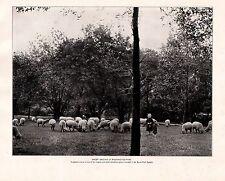 1898 Aufdruck Chicago ~ Schaf Grasend in Washington Park ~ Klein Kinder