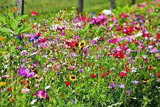 +5000 Samen 🐝 Bienenweide Mischung Insekten Bienen WIESE SOMMER-BLUMEN 🐝 >12qm