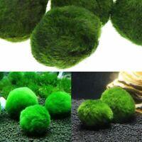 cladophora les aquariums decor boule verte marimo moss. plantes vivantes