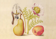 Circa 1592 Flemish Botanical Watercolor Flowers Fruit Painting Fine Canvas Print