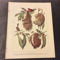 Vintage Book Print - Wonderful Birds' Nests