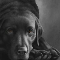 Nigel Hemming DOG TIRED Print, Labrador Gun Dogs Art Canine gift #1