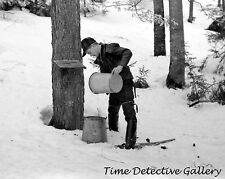Pouring Sap from Maple Tree for Syrup, Waitsfield VT -1940- Historic Photo Print