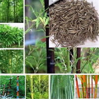 100Pcs Seeds Phyllostachys Pubescens Moso-Bamboo Seeds Garden Plants Decor  iv