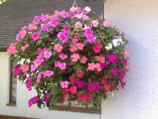 "4x 12"" Plantopia Easy Fill Hanging Basket + 4 easy turn Hooks FREE P+P!!"