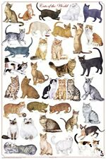 Cats of the World POSTER 60x90cm NEW * different breeds names