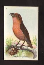 American Crossbill--1934 Church & Dwight Useful Birds of America Card
