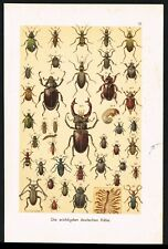 Beetles, Coleopters, Bugs, Entomology, Insects, Antique Plate - F.Martin 1901