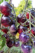 10 graines de tomate PAINTED PINK jolie rareté résistante tolérante au froid