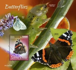 Sierra Leone Butterflies Stamps 2020 MNH Red Admiral Butterfly Insects 1v S/S