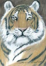 ACEO original pastel drawing  siberian tiger big cat wildcat by Anna Hoff