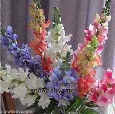 2000 Snapdragon Seeds Antirrhinum Majus Dragon's mouth Mixed Colors Cut Flower