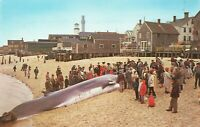 Beached Whale Finback Beach Home Provincetown Cape Cod MA 1960s Chrome Postcard