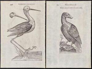 Ulysse Aldrovandi Opera Omnia 1599 - 1648 - extraordinarily rare, first edition.