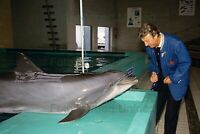 Peter Alexander With Dolphin 20 X 30 CM Photo Without Autograph Nr 2-31