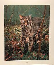 Charles Frace Bobcat Print