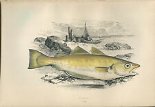"""1877 Couch's """"WHITING""""  Sea Fishes - Hand-Coloured Fish Lithograph Print"""