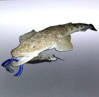 Flathead Fish photo Vinyl cut sticker Boat Sticker 180×100mm lazy lizard aussie