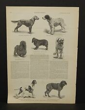 Harper's Weekly 1Pg Prize Dogs From Bench Show Madison Square Garden 1888 B7#44