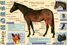 More details for poster points of the horse mini 60 x 40cm