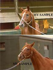 2 Rare 1976 Vintage Majestic High Belmont Park Barn Horse Race 8 by 10 Photos