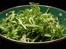 1,000+ Arugula- Rocket Salat (Roquette) Heirloom Seeds- Grown in 2017  for 2018