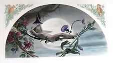 WNY Hand Colored Steel Eng. - WINGED FAIRY ON VINE HAMMOCK - c1900