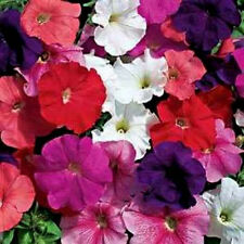 Petunia Seeds, Farm Mix, Mixed Petunia Seeds, For Hanging Baskets Non-Gmo, 75ct