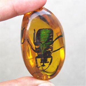 Amber Fossilen Insekten Bernstein Insektenproben Manuelles Polieren Edelstein es