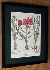 Tulip - vintage Print by Besler - 20''x16'' frame - botanical besler wall art