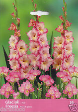 16 PINK PASSION MIXED BULBS GLADIOLI FREESIA garden spring flowers PLANT SUMMER
