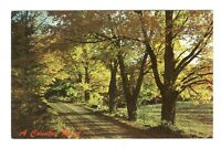 A Country Road Vintage Postcard EB55