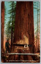 Postcard Spokane WA c1910s Giant Fir Tree Two Men with Axes Crosscut Saw