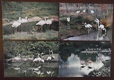 Birds, Flamingos Unposted Postcards x 4, by J Arthur Dixon.