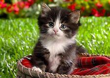 4Pack Cat Cats Kitten Kittens Spring Stationery Greeting Notecards / Envelopes 1