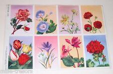Ancienne planche Les belles Images WILLEB : Fleurs - 8 images
