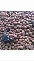 1 Litre, Expanded Clay Pebbles, Aeroponics & Hydroponics | DoctorBlooms