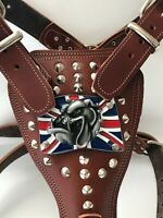 BULLDOG HARNESS-BRITISH/ENGLISH BULLDOG - REAL GENUINE LEATHER DOG HARNESS